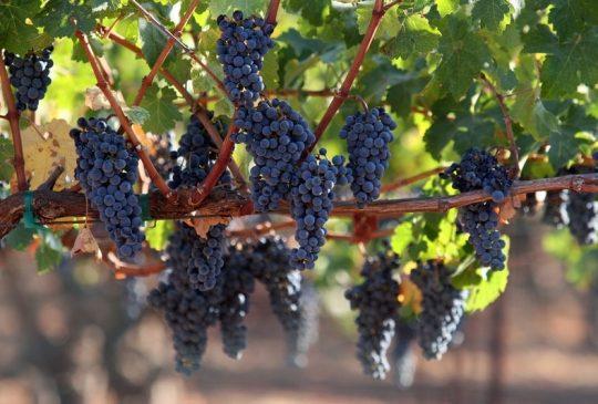 a-wine-making-albufeira