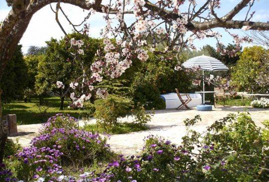 Blossom in Corotelo