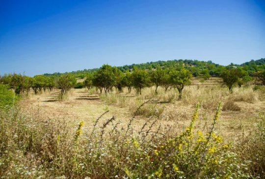 going-out-faro-towards-rural-algarve
