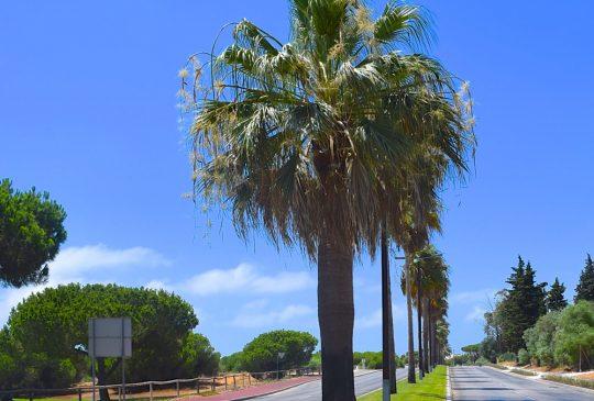 Palm-street